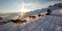 chiens montagne Aérien fog studio